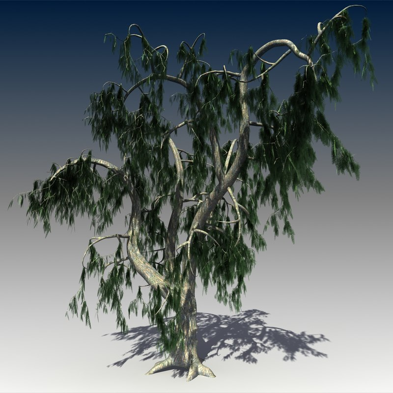 solarseas_acacia_tree-_View01.jpg