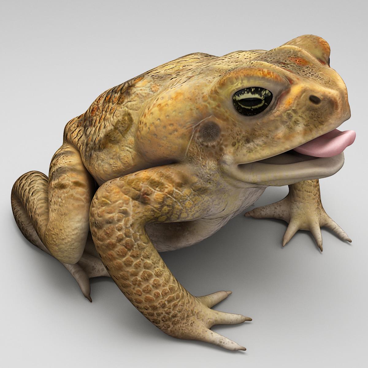 Frog_Cane_Toad_0002.jpg