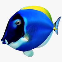 3ds max surgeonfish
