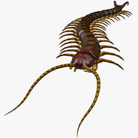 3d model of centipede modelled