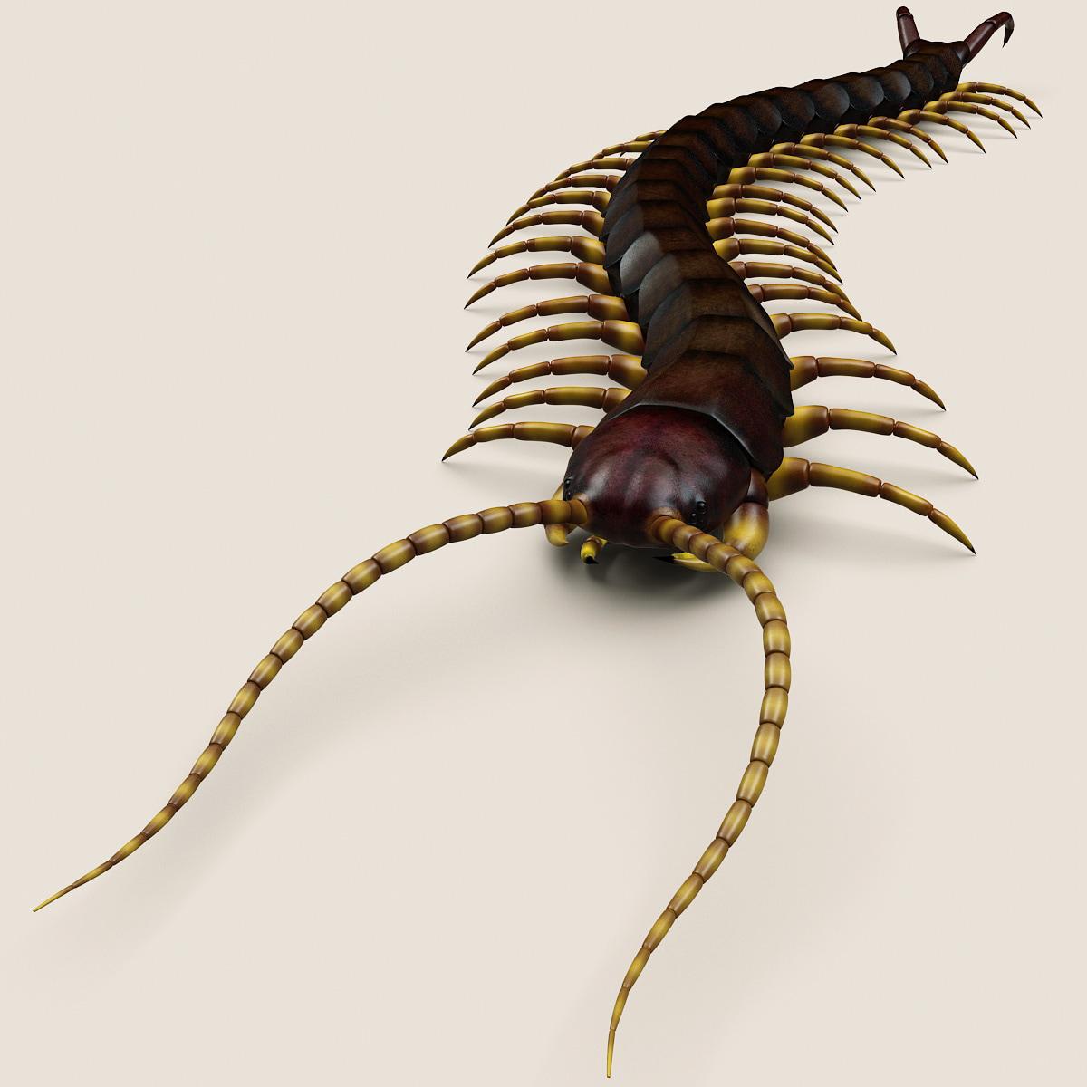 Centipede_V2_001.jpg