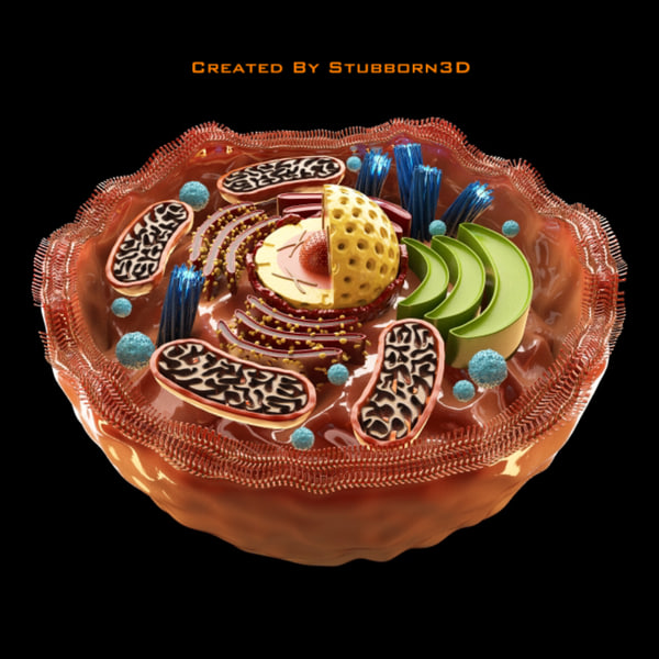 how to make a human cell model 3d