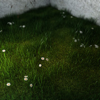 Green Grass And Small Flowers