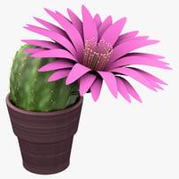 3d model cactus echinocereus grandis