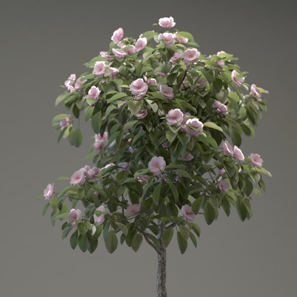 3d model small ornamental tree Small flowering trees