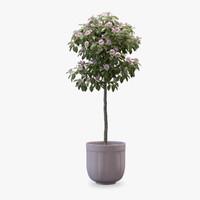3d model small ornamental - tree