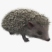 hedgehog modelled 3d model