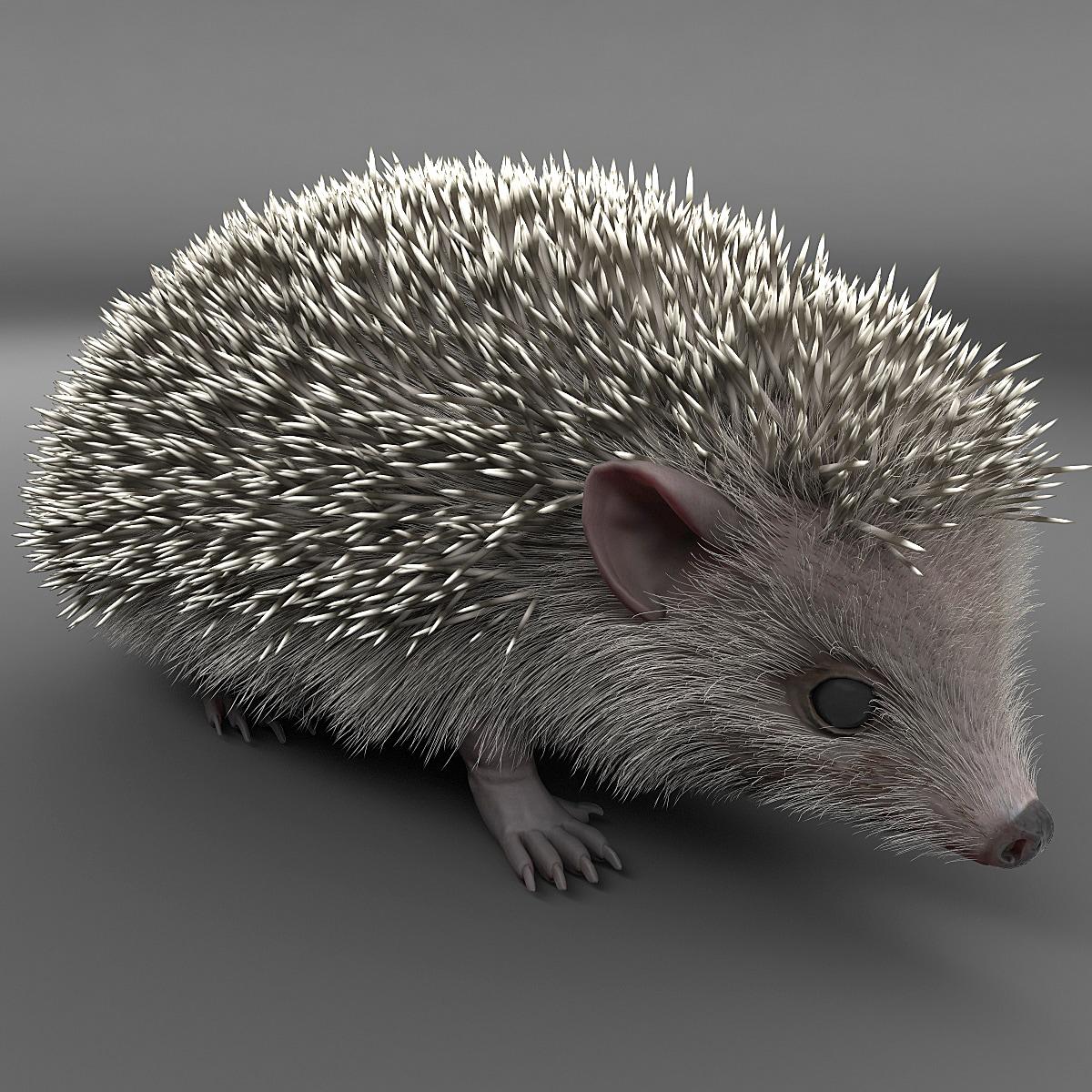 Hedgehog_001.jpg