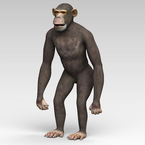 Chimp02.jpg