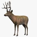 Elk 3D models