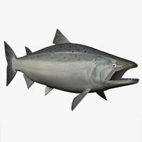 3d obj coho salmon