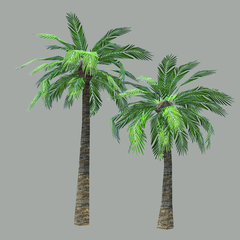 palm_trees_preview01.jpg