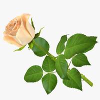 3d rose 12 model