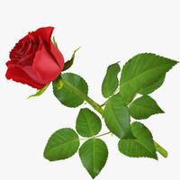 3d rose 11 model