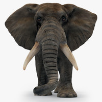 africa elephant african 3d model