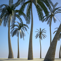 palm trees obj