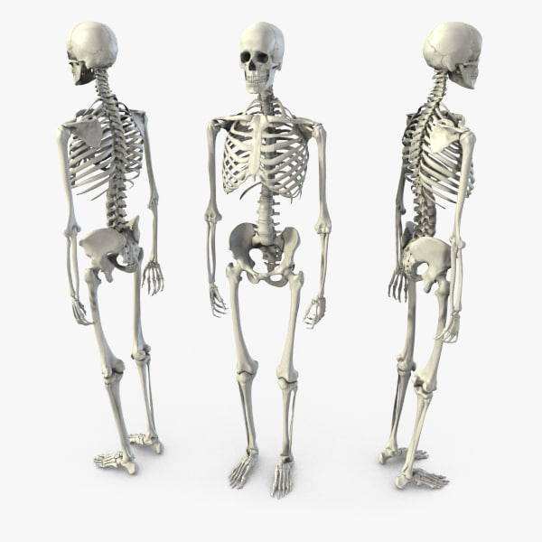 BB - Skeleton - 01.jpg