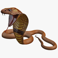Snake Cobra Pose 4