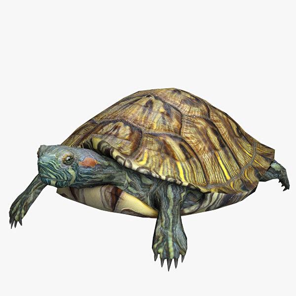 Water_turtle_01.jpg