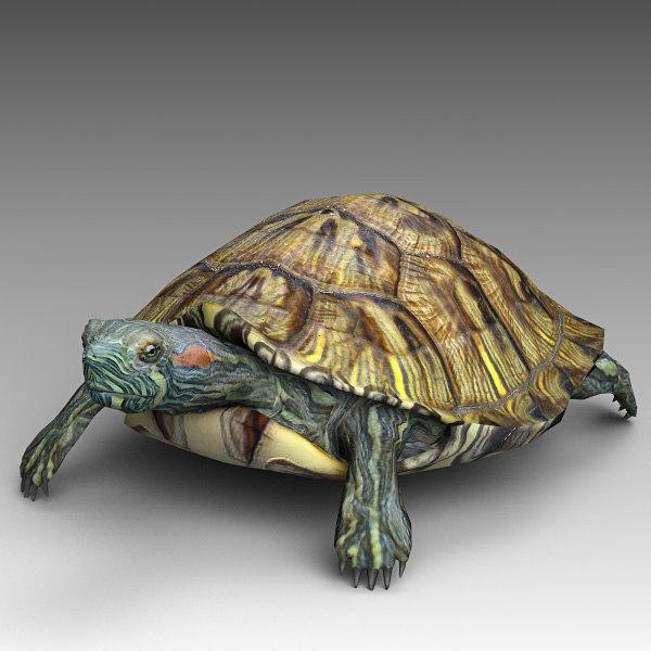 Water_turtle_02.jpg