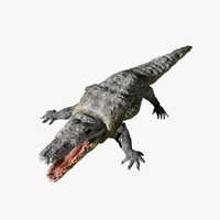crocodile animal alligator 3d c4d