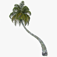 3d coconut palm model