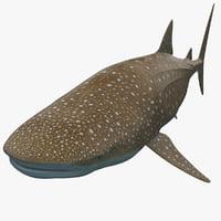 whale shark max