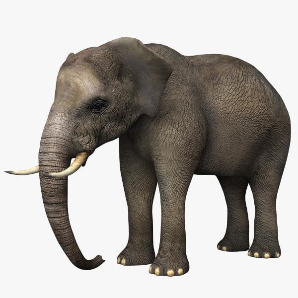 elephant_1_600.jpg