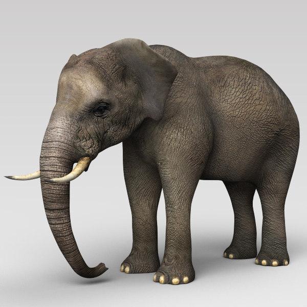 elephant_2_600.jpg