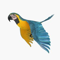 3d model parrot animation flying