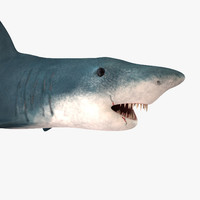 3d shark games normal model