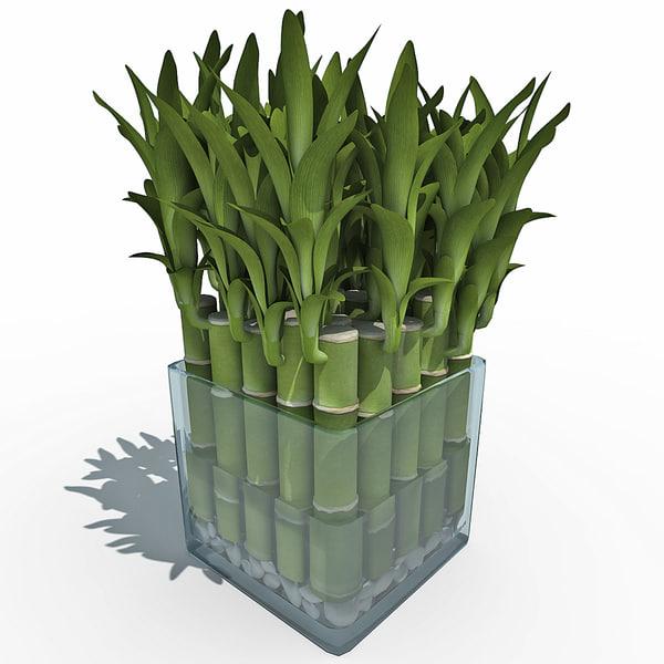 3d model lucky bamboo. Black Bedroom Furniture Sets. Home Design Ideas