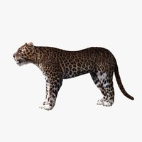 leopard animation 3d model