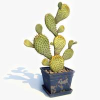 maya cactus pot