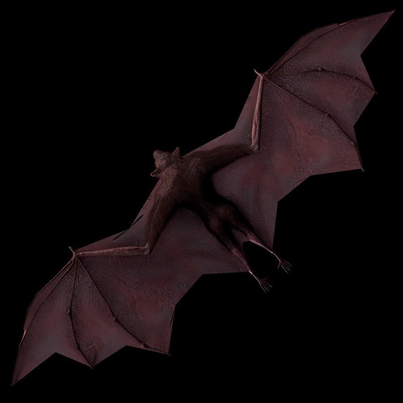 FlyingFox-TS-gfCM01b.jpg