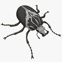 3ds goliath beetle