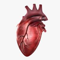 c4d human heart