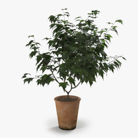 max photorealistic ornamental tree
