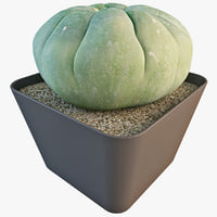 matucana madisoniorum 2 3d model