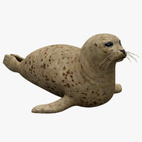 3d harbor seal