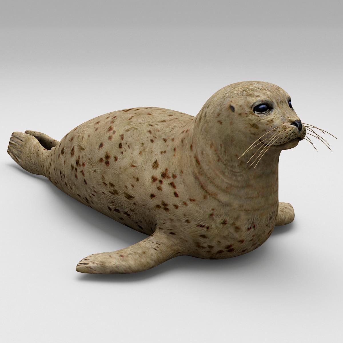 Harbor_Seal_0000_2.jpg