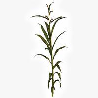 3d corn plant