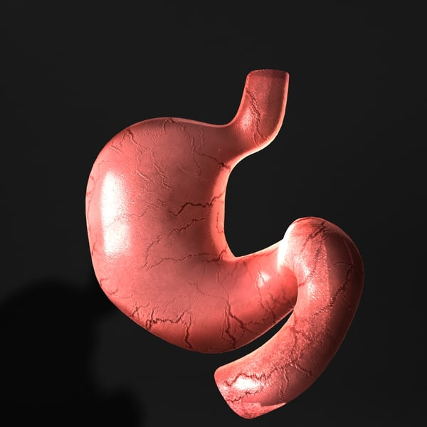 human stomach 3d model - Stomach... by JS 3D