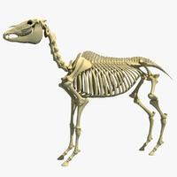 3d horse skeleton