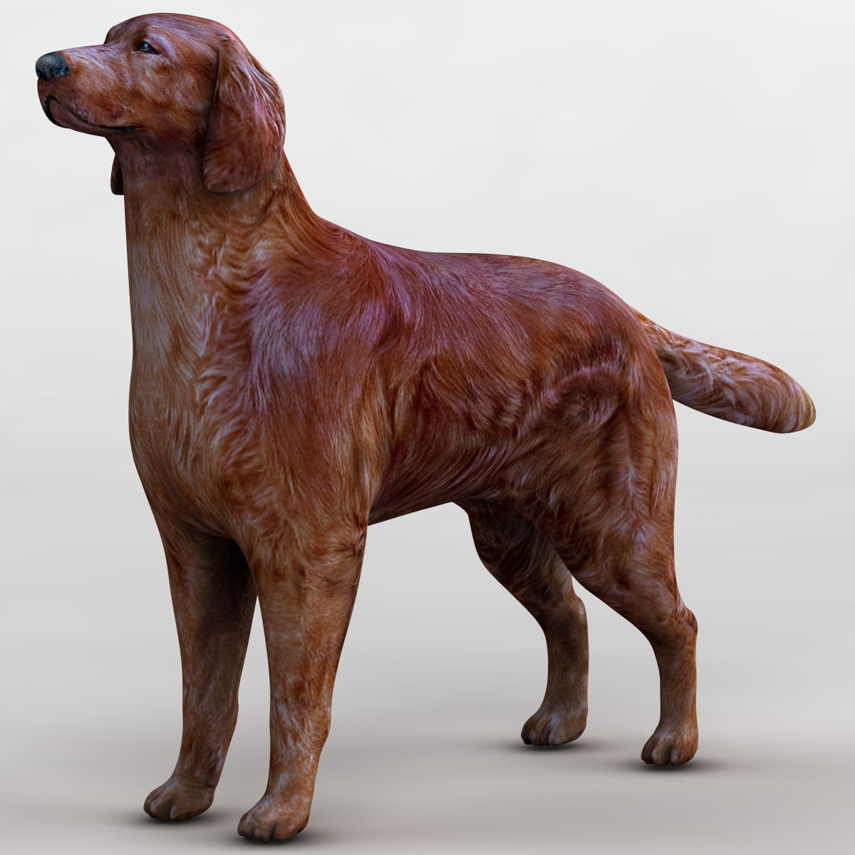 123421_Dog_Irish_Setter_004.jpg