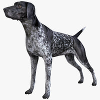 maya german shorthaired pointer