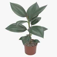 3d model rubber plant