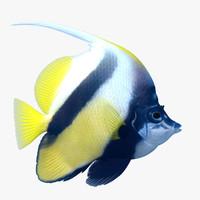 3ds longfin bannerfish heniochus acuminatus