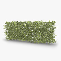 siberian dogwood hedge 3d model