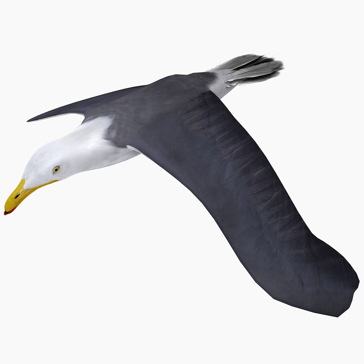 Gull_Flying_Animation_V1_001.jpg